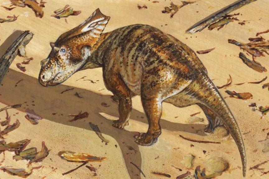 Baby Chasmosaurus