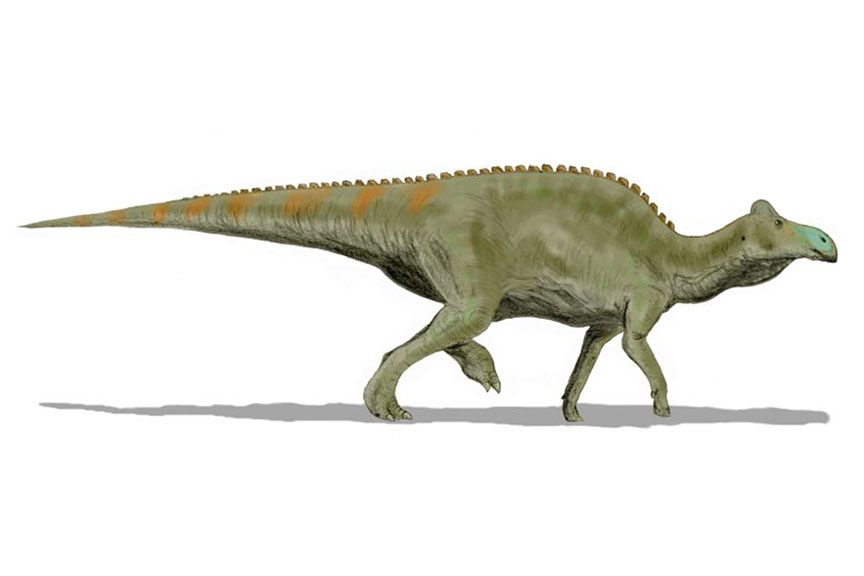 Crested Edmontosaurus