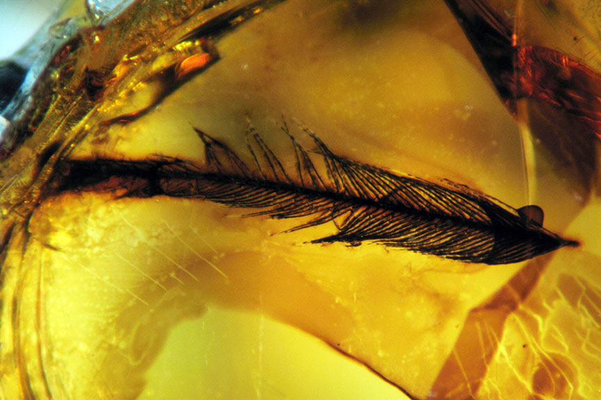 Feathers in amber