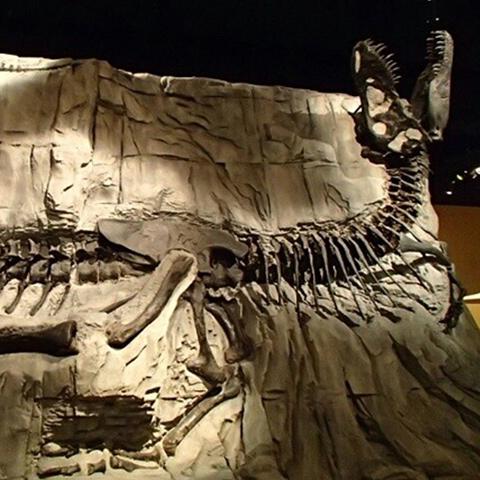 "Fósil de tiranosaurio rex ""Black Beauty"" en Royal Tyrrell Museum, Drumheller"