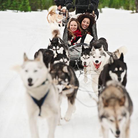 Hondenslee rijden in de buurt van Spray Lakes in Canmore, Kananaskis Country