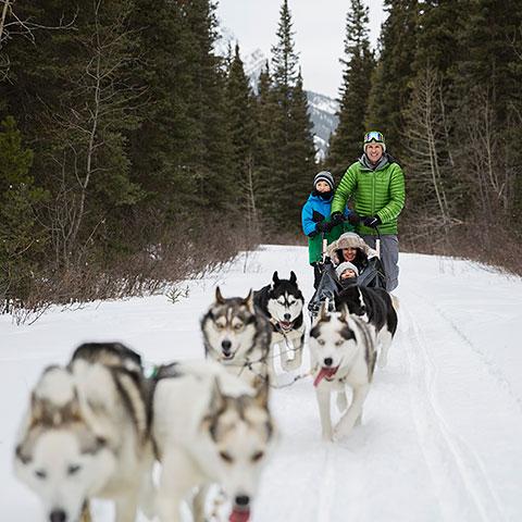 Family Dog sledding Kananaskis