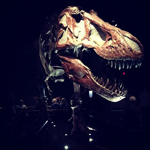 Fósil de tiranosaurio rex en Royal Tyrrell Museum, Drumheller