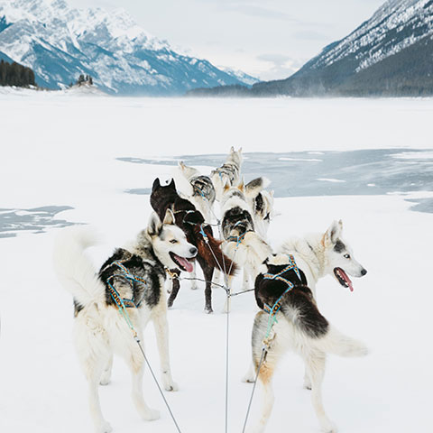 More Canadian Rockies Dogsledding