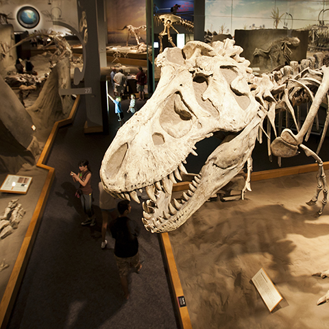 Dinosaurusavontuur