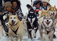 Dog Sledding in Kananaskis