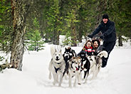 Dog Sledding at Spray Lakes